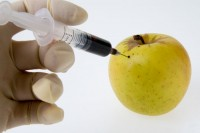 تفاحة محقونة